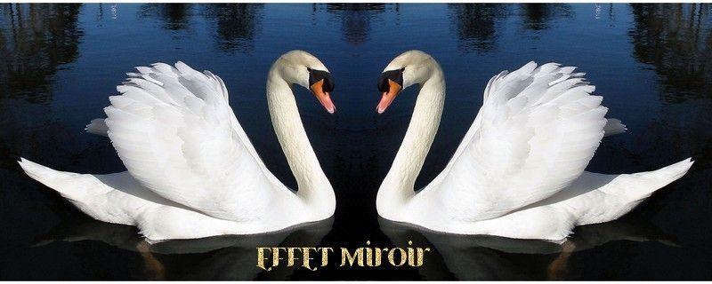 Plugin effet miroir plugin miroir effet for Effet miroir photofiltre